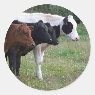 Cows in a Row Round Sticker