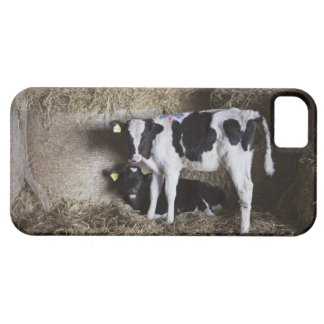 Cows in barn 3 case for the iPhone 5