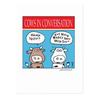Cows in Conversation Postcard
