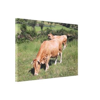 Cows in field on El Camino, Spain Canvas Print
