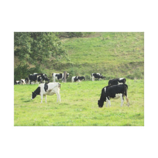 Cows in the Country Pasture Photo Wall Canvas Art