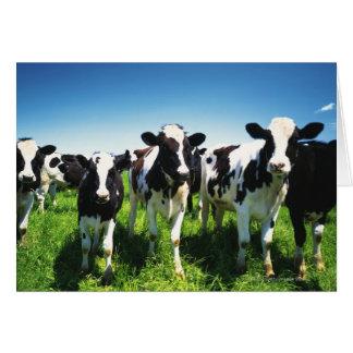 Cows in the field, Betsukai town, Hokkaido Card