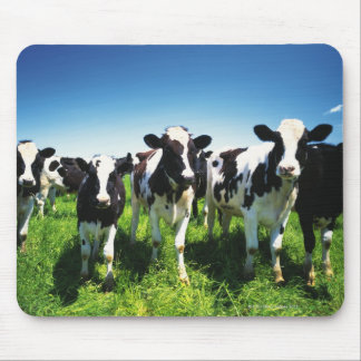 Cows in the field, Betsukai town, Hokkaido Mouse Pad