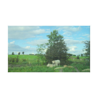 Cows in the Meadow Canvas Print