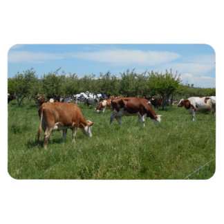 Cows In The Pasture Magnet