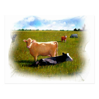 COWS IN THE PASTURE PASTEL POSTCARD