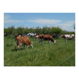 Cows In The Pasture Poster