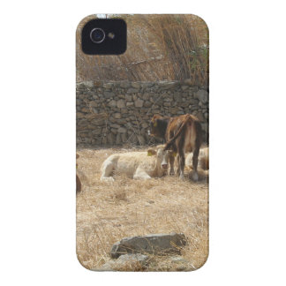 Cows iPhone 4 Case