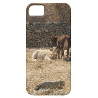 Cows iPhone 5 Covers