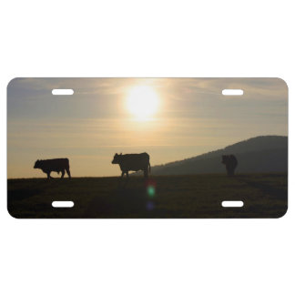 Cows License Plate
