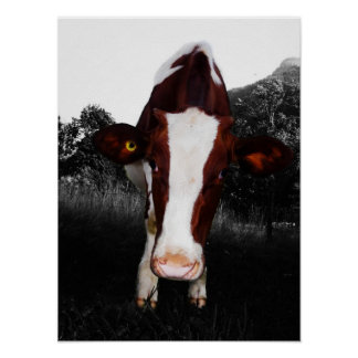 Cows - NOT Always Black and White Posters