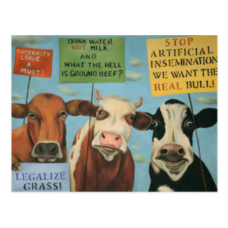Cows On Strike Postcard