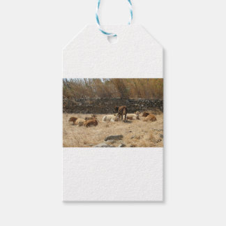Cows Pack Of Gift Tags