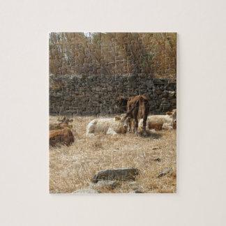 Cows Puzzle