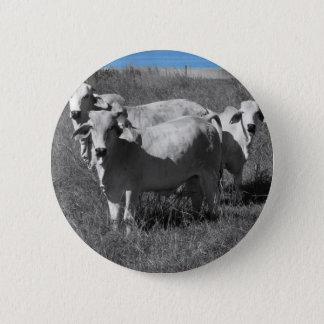 COWS QUEENSLAND AUSTRALIA 2 INCH ROUND BUTTON