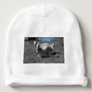 COWS QUEENSLAND AUSTRALIA BABY BEANIE