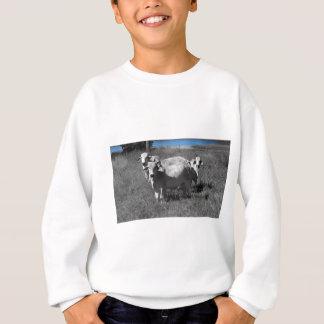 COWS QUEENSLAND AUSTRALIA SWEATSHIRT