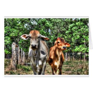 COWS RURAL QUEENSLAND AUSTRALIA ART EFFECTS CARD