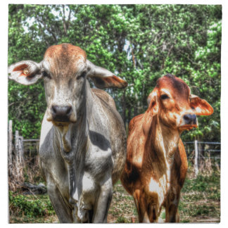 COWS RURAL QUEENSLAND AUSTRALIA ART EFFECTS NAPKIN