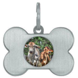 COWS RURAL QUEENSLAND AUSTRALIA ART EFFECTS PET TAG