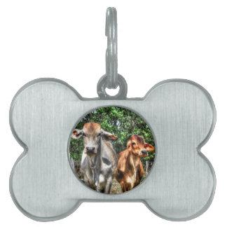 COWS RURAL QUEENSLAND AUSTRALIA ART EFFECTS PET TAG