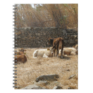 Cows Spiral Note Book