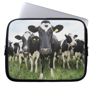 Cows standing in a row looking at camera laptop computer sleeves