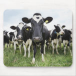 Cows standing in a row looking at camera mousepad