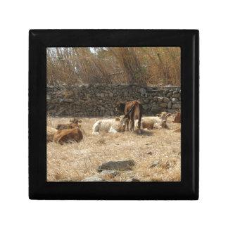 Cows Trinket Box