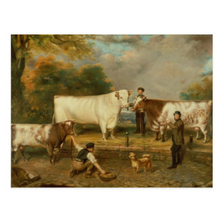 Cows with a herdsman postcard