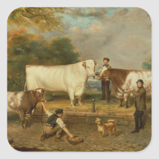 Cows with a herdsman square sticker