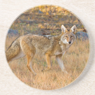 Coyote (Canis Latrans) Hunting Coasters