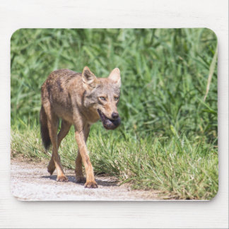 Coyote Carrying a Turtle Mouse Pad