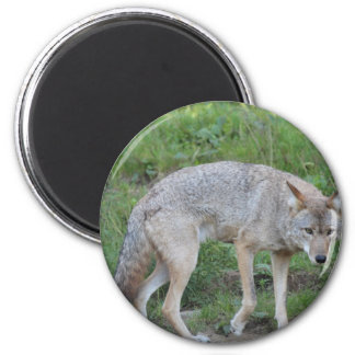 Coyote Collection 2 Inch Round Magnet