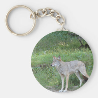 Coyote Collection Basic Round Button Keychain