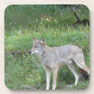 Coyote Collection Beverage Coaster