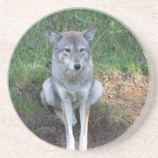 Coyote Collection Beverage Coasters