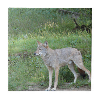 Coyote Collection Ceramic Tiles