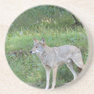Coyote Collection Coaster