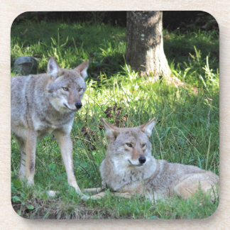 Coyote Collection Coasters