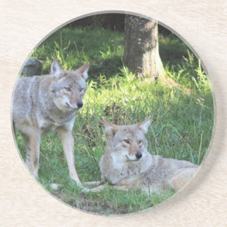Coyote Collection Drink Coaster