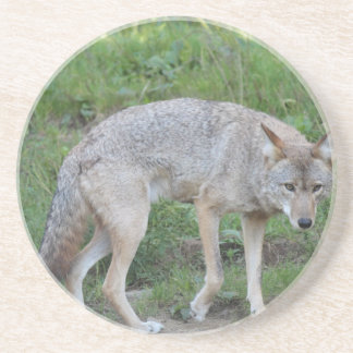 Coyote Collection Drink Coasters