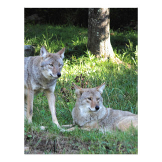 Coyote Collection Letterhead