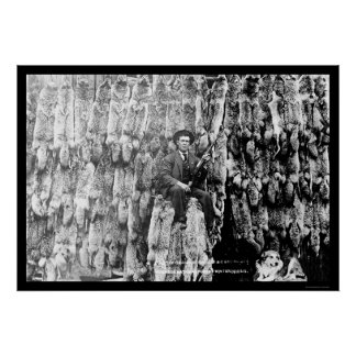 Coyote Hunter Amid Over 60 Pelts 1913 Poster