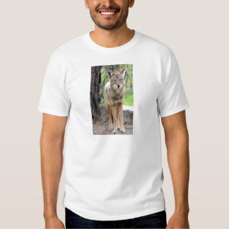 coyote in griffith park 003 tshirt