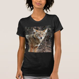 coyote in griffith park 005 tee shirts