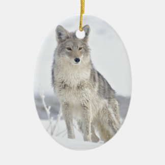 Coyote in Snow at Yellowstone Ceramic Oval Ornament