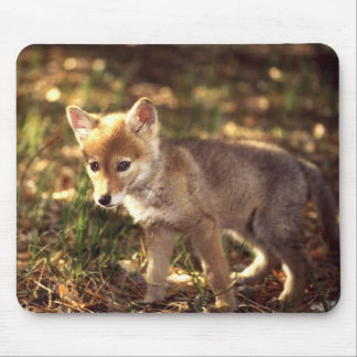 Coyote Pup Mousepad