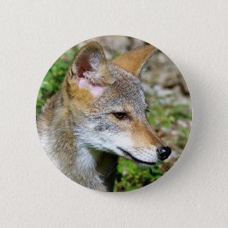 Coyote Pup Profile 2 Inch Round Button