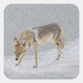 Coyote Square Sticker
